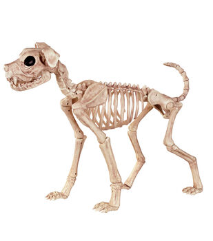 The Boneyard Dog Skeleton