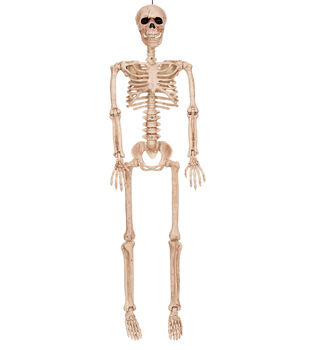 The Boneyard 36'' Posable Skeleton