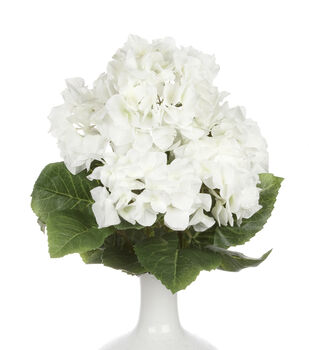"Bloom Room 19"" Hydrangea x5 Bush-White/Cream"