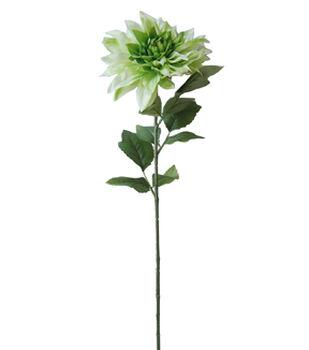Blooming Spring Dahlia Stem-Green