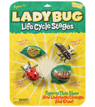 Insect Lore Life Cycle Stages-Ladybug