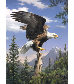 """Reeves Paint By Number Artist Collection 9""""X12-Screaming Eagle"""