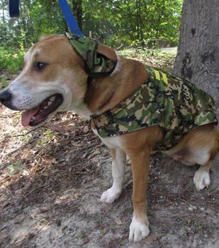 How To Make A Pet Soldier Uniform Costume