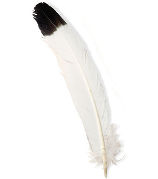 """Leather Factory Wing Feathers-Large Tipped 12""""-4"""