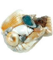 Sea Shells W/Pectin Shell Assortment-24/Pkg