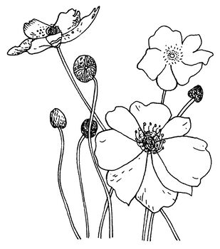 """Penny Black Rubber Stamp 2.25""""X2.75-Poppies"""