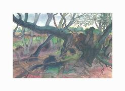 """Bild """"Waldlandschaft auf Moen"""" (2001), ungerahmt"""