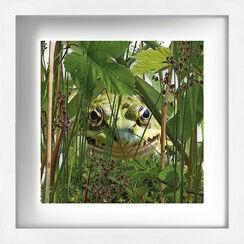 """Bild """"Frosch"""" (2014)"""
