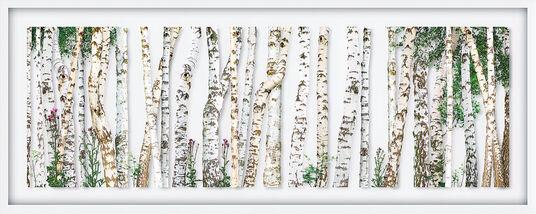 "Andreas Lutherer: Bild ""Birken"" (2015)"