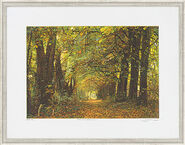 "Picture ""Autumn Wood - Biedensand"""
