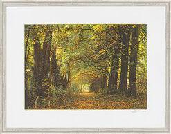 """Bild """"Herbstwald - Biedensand"""", gerahmt"""