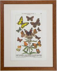"Bild ""Schmetterlinge I"", gerahmt"