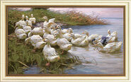 "Picture ""Ducks at the lakeshore"""
