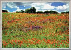 """Fotografik """"Landschaft mit Mohnblumen 01"""" (2006) - nach Monet, gerahmt"""