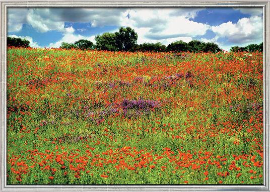 """Gerhard Karrasch: Fotografik """"Landschaft mit Mohnblumen 01"""" (2006) - nach Monet, gerahmt"""