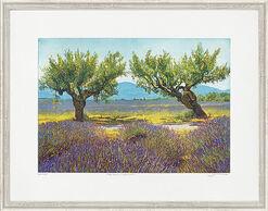 """Bild """"Aprikosen und Lavendel"""", gerahmt"""