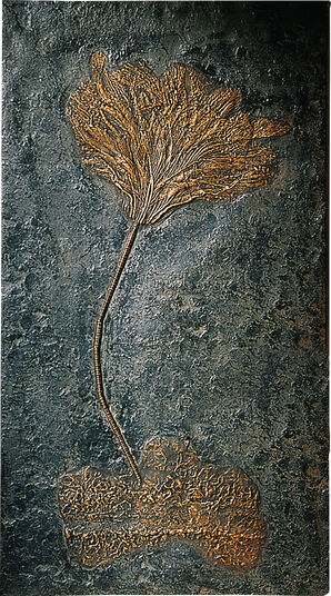 Sea lilies on driftwood fossil