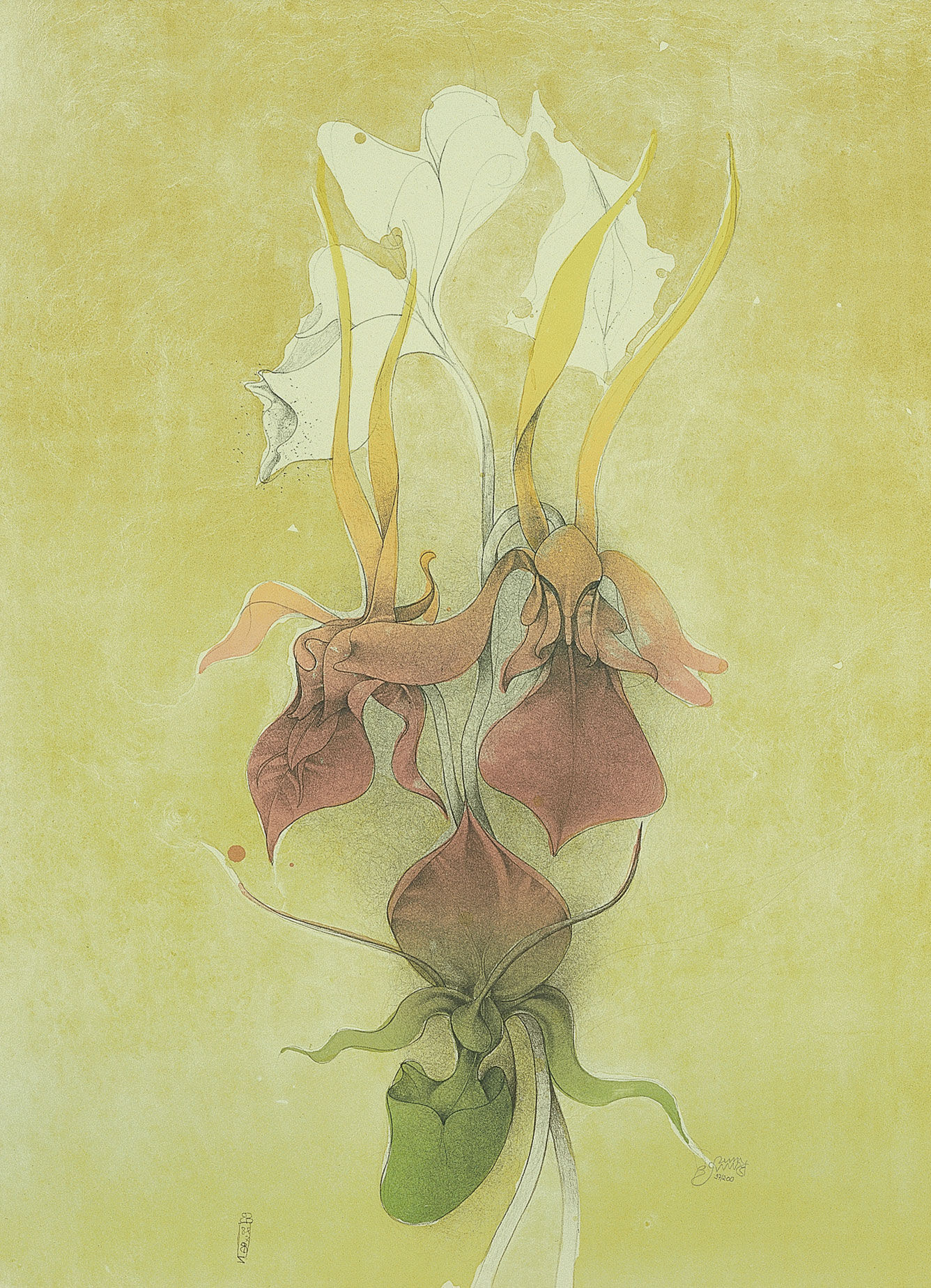 """Picture """"Lady's Slipper"""" (1989)"""