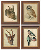 Four animal pictures in one set
