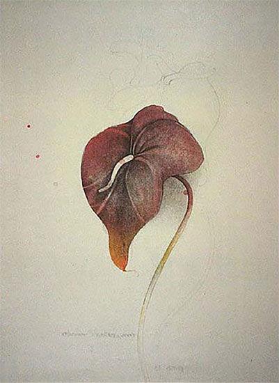 """Picture """"Anturium Scherzonicum"""" (1981)"""