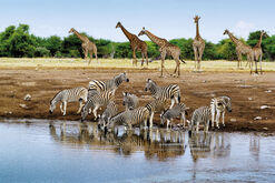 "Bild ""Life at Chudop waterhole"""