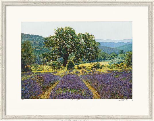 "Günther Hermann: Bild ""Lavendel I"", gerahmt"