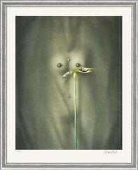 "Bild ""Torso mit Blume"" - aus Grafikfolge ""Lithografien II"", gerahmt"