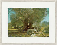"Picture ""Olive Trees II Andalusia"""