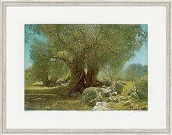 "Bild ""Olivenhain II Andalusien"", gerahmt"