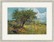 """Bild """"Naturpark Etna, Sizilien"""", gerahmt"""