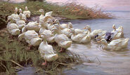 """Picture """"Ducks at the lakeshore"""""""