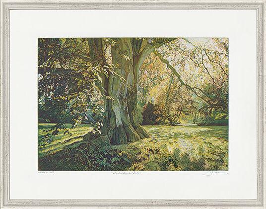 """Günther Hermann: Bild """"Landschaftsgarten: Buche, Sheffield Park"""", gerahmt"""