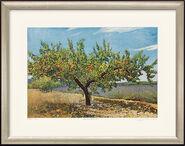 """Bild """"Aprikosenbaum I"""", gerahmt"""
