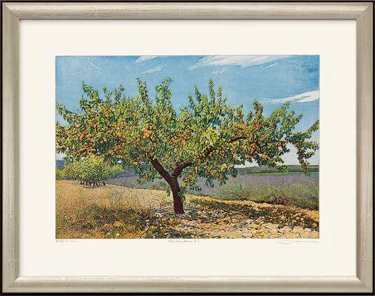 "Günther Hermann: Bild ""Aprikosenbaum I"", gerahmt"