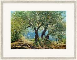 "Bild ""Olivenhain Sizilien I"" (2013), gerahmt"