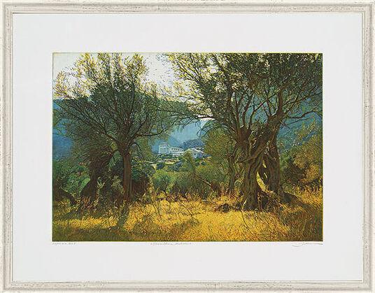"Günther Hermann: Bild ""Olivenbäume, Mallorca"", gerahmt"