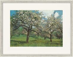 "Bild ""Apfelblüte"", gerahmt"