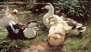 "Picture ""Ducks at the waterlily pond"""