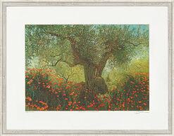 "Bild ""Olivenbaum und Klatschmohn II"", gerahmt"