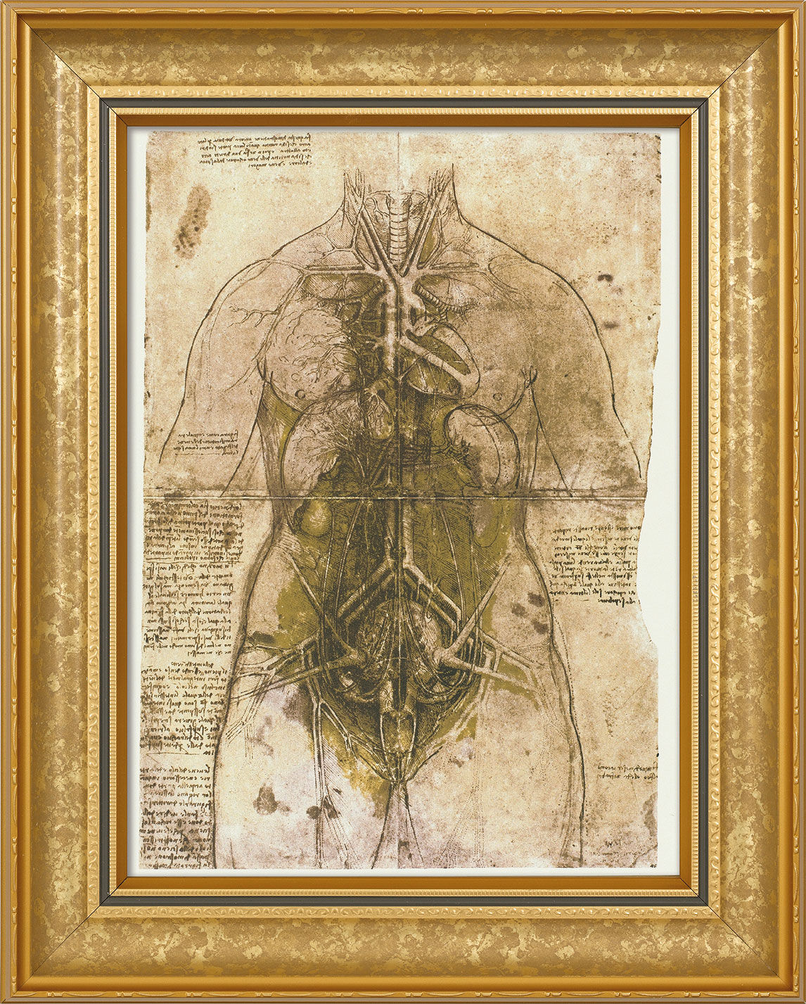 "Picture ""abdominal and thoracic organs"" (around 1500) in classic frame"