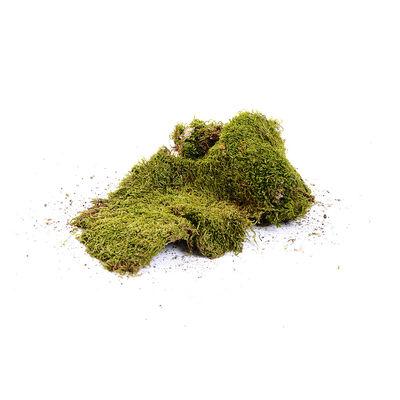 Lappenmoos grün