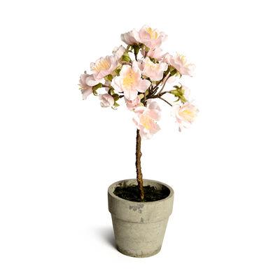 Kirschblüte in Topf rosa ca L:21 cm