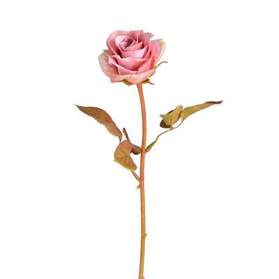 Stielblume Rose, ca L:38cm, altrosa