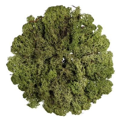 Islandmoos grün ca. 50 g