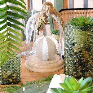Set Kaktus
