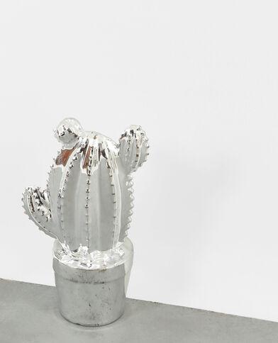 Cactus platine gris argenté