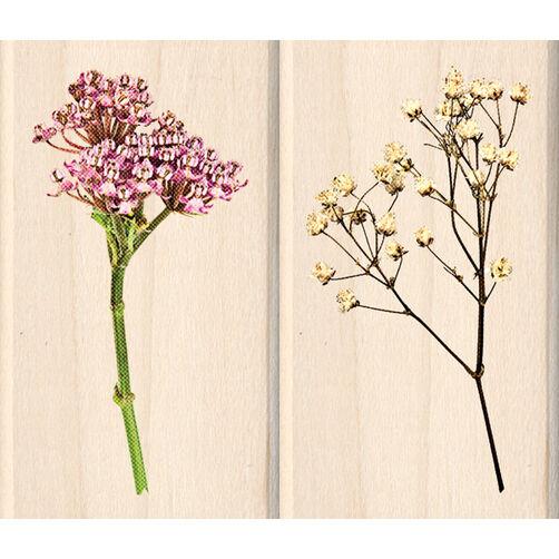 Wild Flowers_60-00794