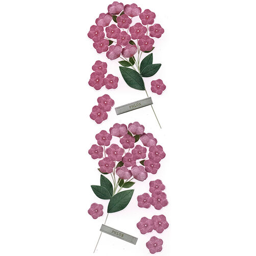 Phlox Millinery Stickers_41-00483