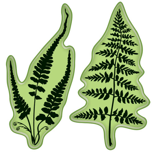 Ferns Mini_60-60150