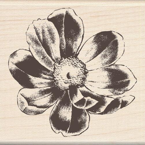 Flower_60-00640